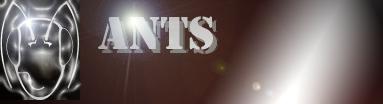 Ants, P2P